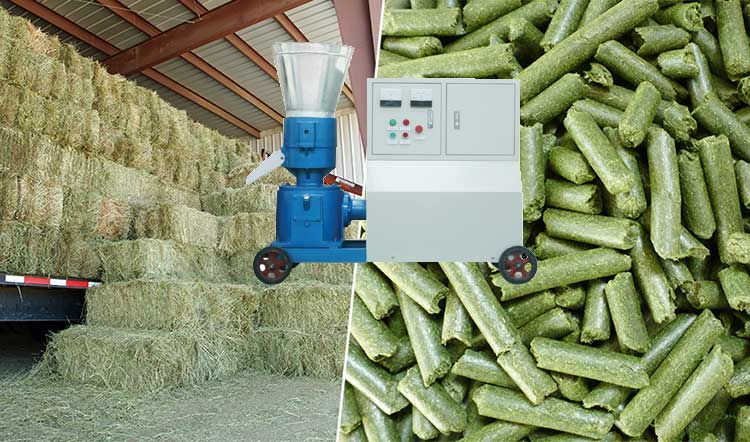 manufacturing-fresh-grass-into-biomass-grass-pellets